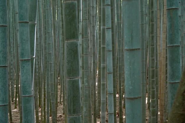 ぼやけた竹林