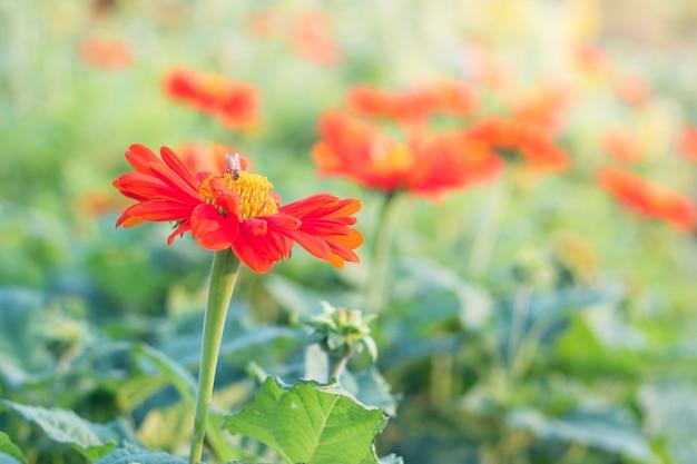 美容色の花のクローズアップ