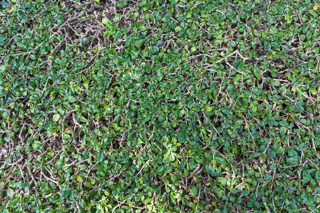 緑の木の塀