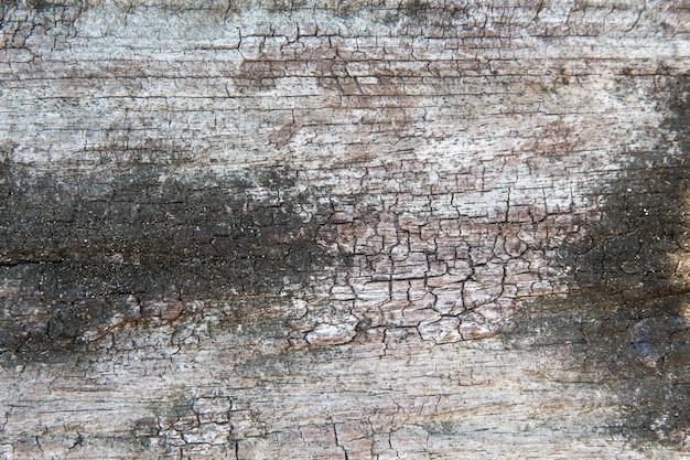 木の古いカットの表面