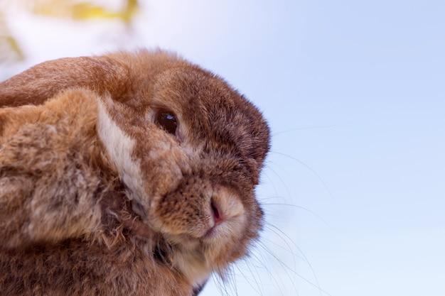 五月晴れの日に緑の草にかわいいウサギ