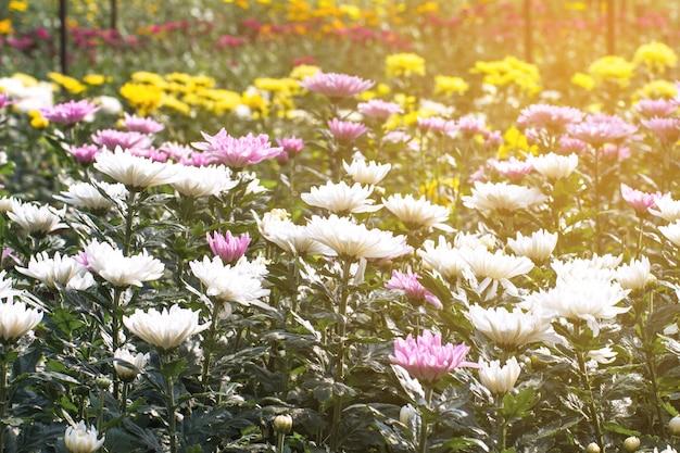 Красивое поле ромашек