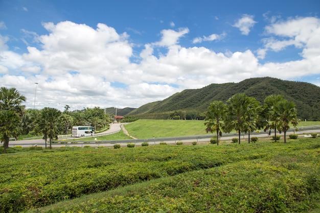 緑の丘を横切る道