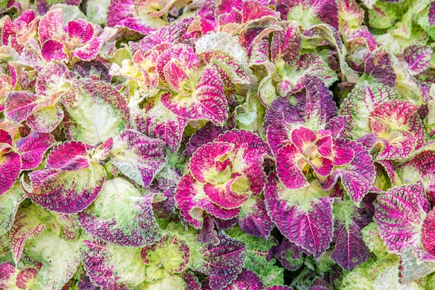 Абстрактная красивая текстура красочных листьев на фоне природы, листья