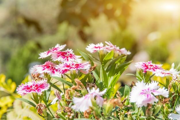 Цветочное поле красивое в садоводстве, сад весеннего сезона, цветы теплые тона