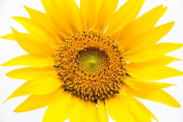 Красивое подсолнуха цветущее поле, цветы красоты