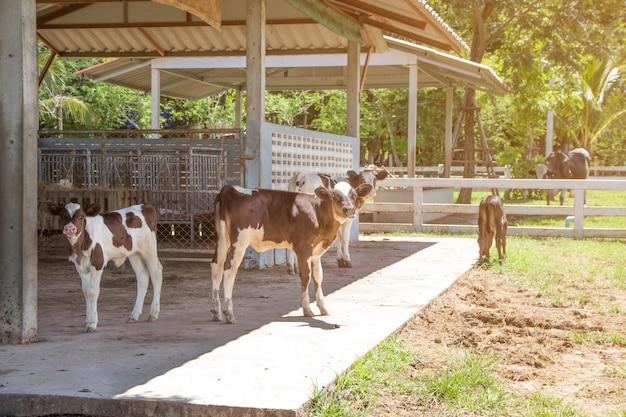 自然の背景の農場での牛とふくらはぎ