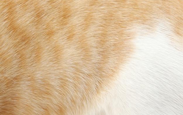 背景の猫の毛のオレンジと白の毛皮