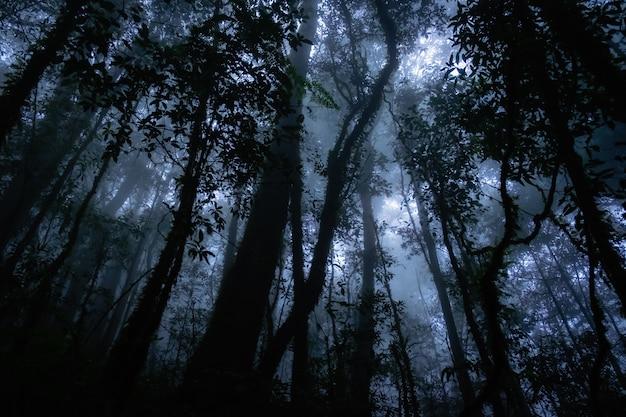 怖い森の中の植物のシルエット