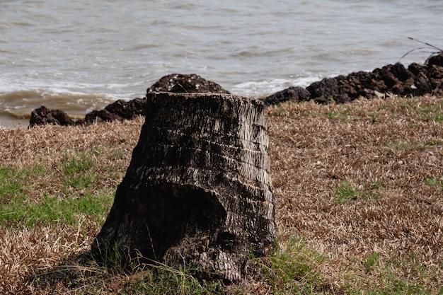 草の上の死んだココナッツの木の切り株