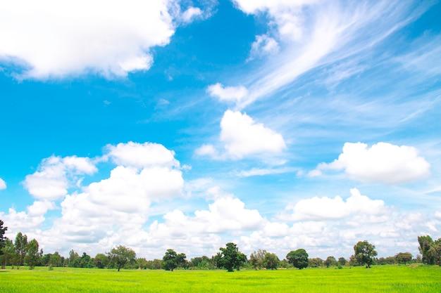 Белые облака в голубом небе с луговым деревом, красивое небо с облаками