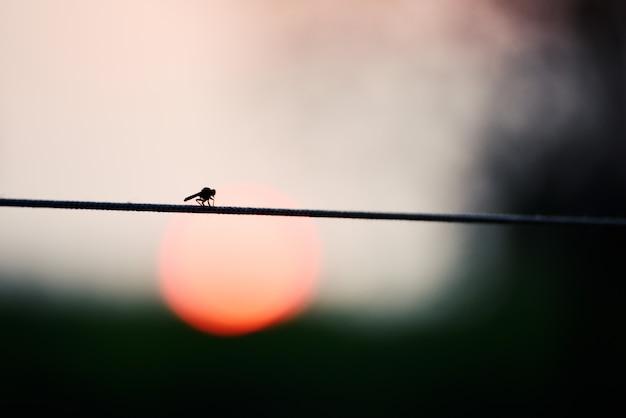 Красивая стрекоза в естественной среде обитания