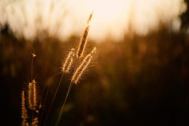 Красивая трава цветков в предпосылке природы.