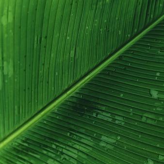 Красивые зеленые листья