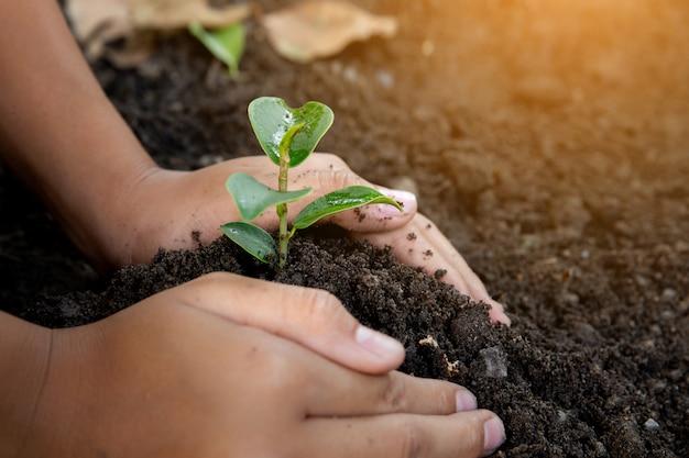 子供の手に黒い土の小さな苗。世界環境デー。地球の日。