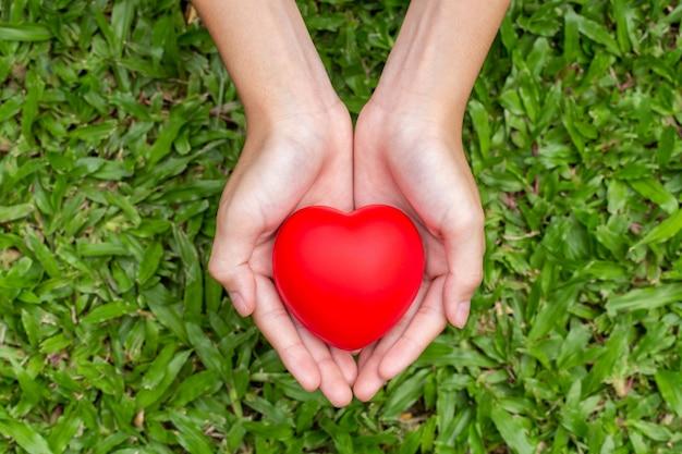 Руки держат красное сердце на траве