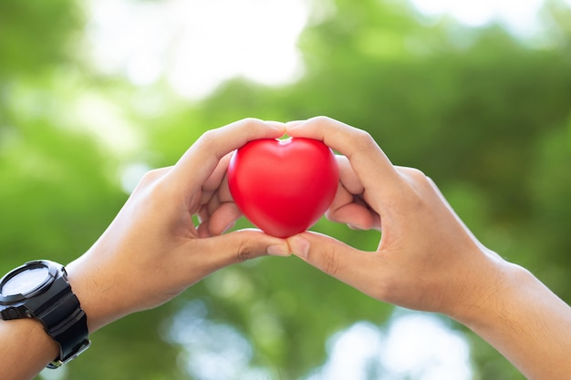 Две руки держат красную куклу в форме сердца на зеленый день сердца мира
