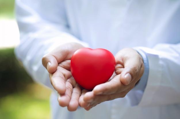 Заделывают доктора держа и заботясь красное сердце в две руки
