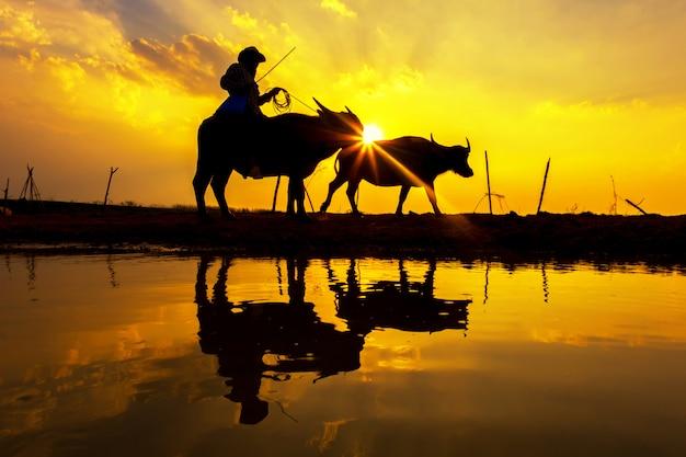 Силуэт закат с сельской жизни