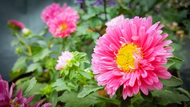 ぼんやりした背景に庭のピンクの花。