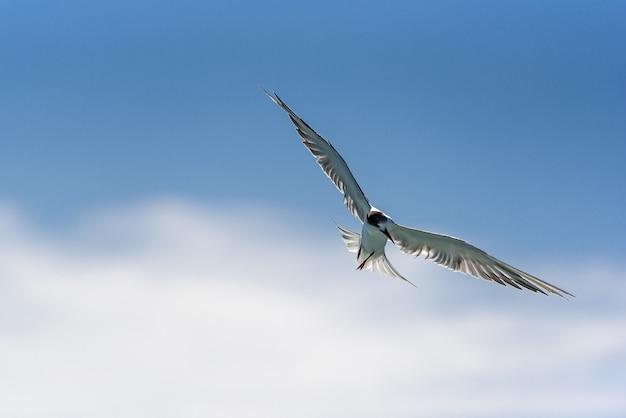 明るく青い空の背景に、シーガルが自由に飛ぶ