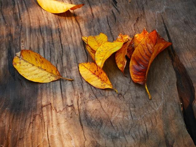 木製の背景に乾燥葉
