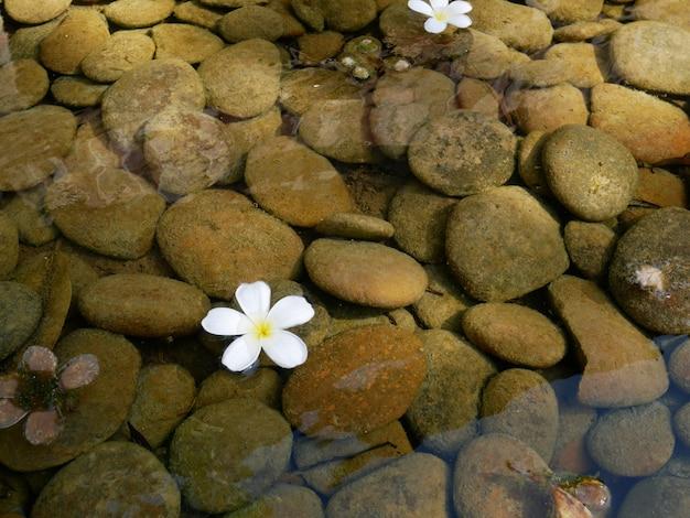 水石と白い花