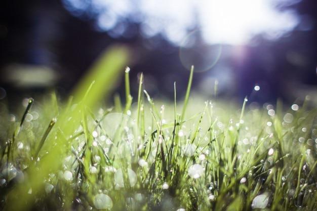 Размытые травы утром