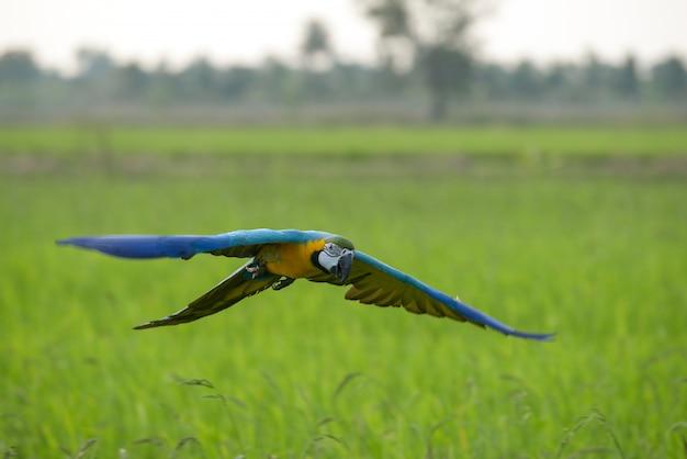 Красивая ара летающих действий в поле
