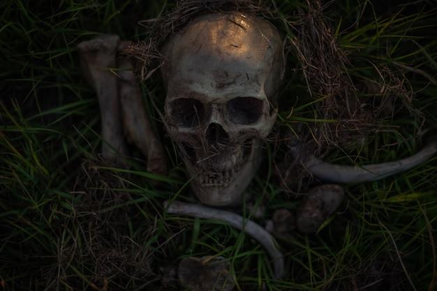 静かな人生、人間の頭蓋骨と骨は、薄暗い畑で乾いた草の上で泳ぎました。