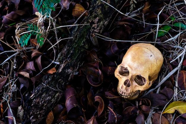 床に人間の頭蓋骨とホラーシーン。ハロウィンのコンセプト。