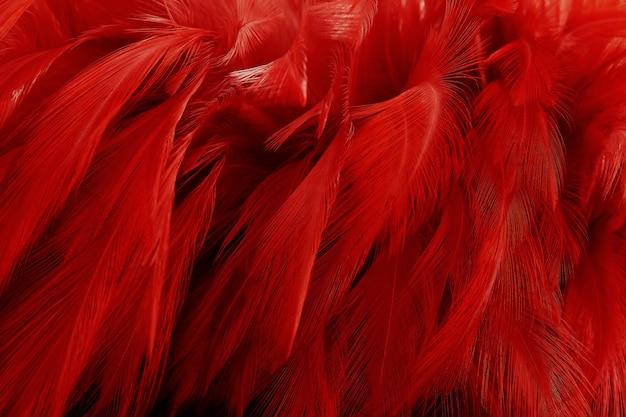 美しい濃い赤の羽のテクスチャ背景。