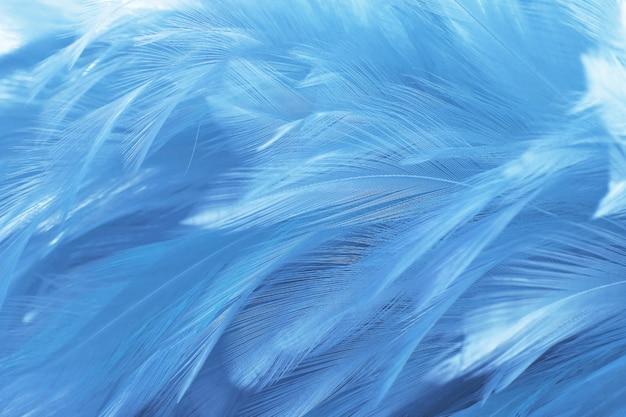 美しい濃い青の羽のテクスチャ背景。