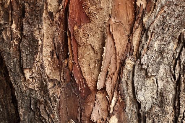 森の中の木の幹、古いとクラックと暗い茶色の樹皮ウッドの背景のクローズアップ。