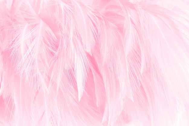 Красивый светло-розовый перья птиц шаблон текстуры фона.