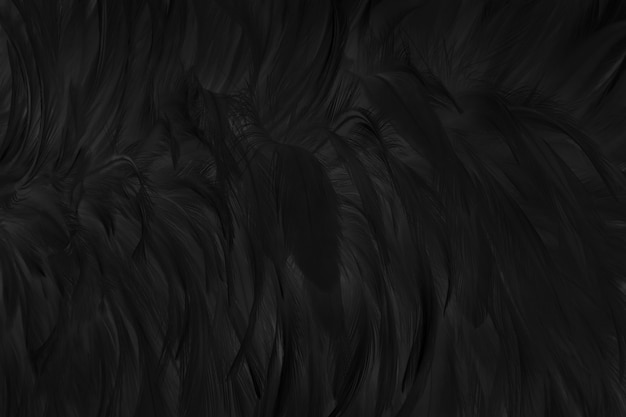 美しい黒灰色の鳥の羽のテクスチャ背景。