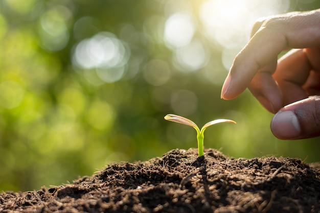 苗は土から成長しています。