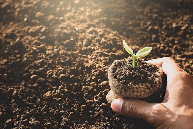 人間の手が木を植えている。