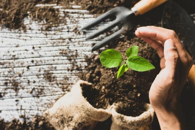 苗と植え付け用具。