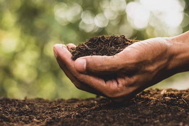 肥沃な土壌、肥料。