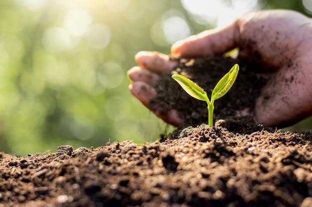 男性の手が苗を植えています。