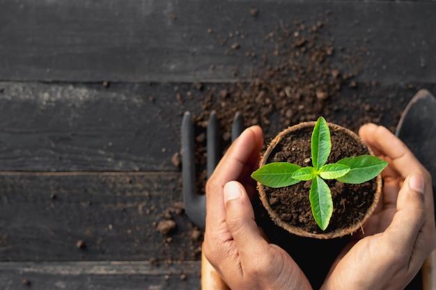 人間の手が土に苗を植えています。
