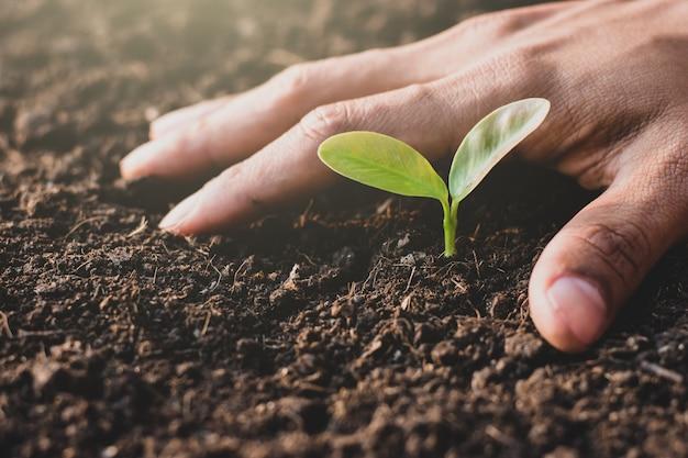 小さな苗は土から成長しています。