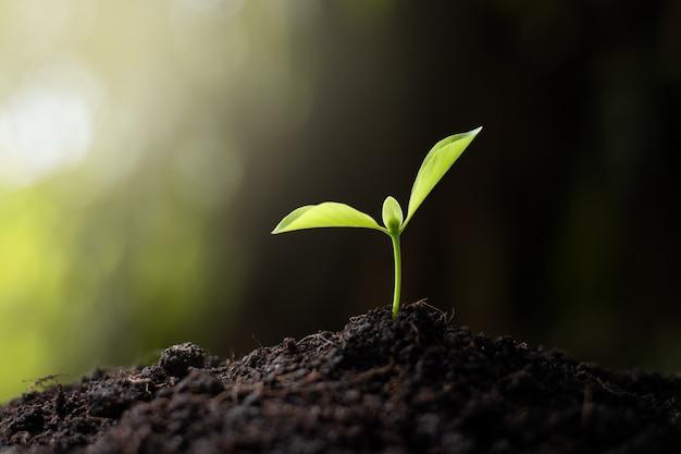 実生は肥沃な土壌から成長しています。