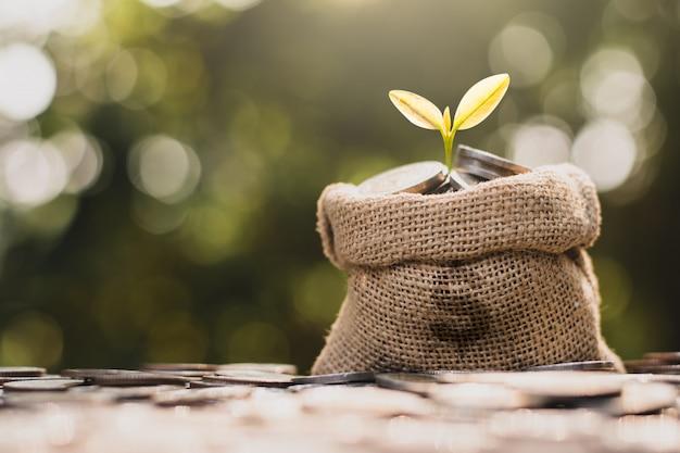 実生は袋袋の中で成長しています。