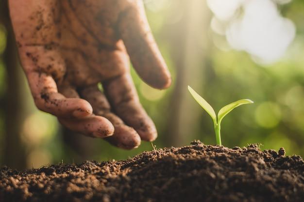 男性の手が苗を土に植えています。