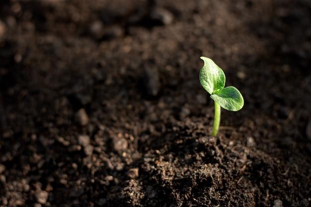 苗は肥沃な土壌から成長しています。