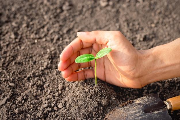 男性の手が土に苗を植えています。