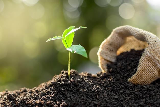 Посев растет с богатой почвы до солнечного солнечного света, который сияет