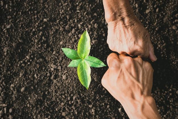 若い男と老女の手は、木を植えるのを助けることで団結を示しています。